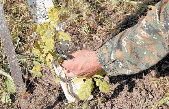 Дрезденские ученые посадили дубы в кайбицких лесах